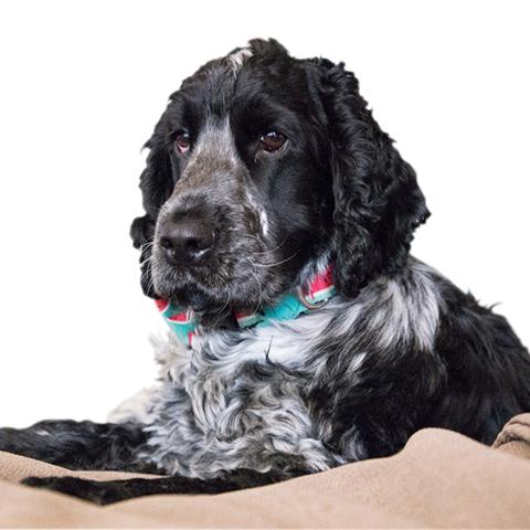 Ozzy – terapeutický antistresový pes